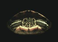 tortue de Rouge-oreille images libres de droits