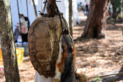 Tortue de rupture de la Floride Shell et fourrure de Fox rouge photographie stock libre de droits