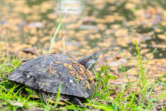 Tortue en parc Photos stock