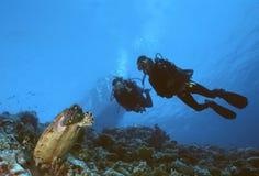 Tortue et plongeurs Image stock