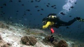 Tortue et plongeurs de mer sur le fond de la mer clair propre sous-marin banque de vidéos