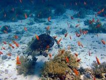 Tortue et poissons image libre de droits