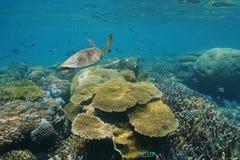 Tortue et poissons de mer verte sous-marine de récif coralien Images libres de droits