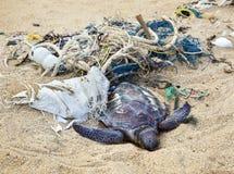 Tortue morte en filets de pêche Image stock