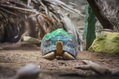 Tortue rayonnée sur le projecteur vert dans l'aquarium en Berlin Germany Image libre de droits
