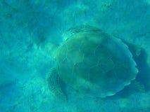 Tortue sur le fond de la mer Photographie stock libre de droits
