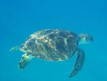 Tortue sur le fond de la mer Image libre de droits