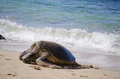 Tortue sur une plage Photos libres de droits