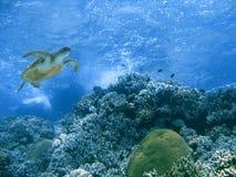 Tortue verte et récif coralien Images libres de droits