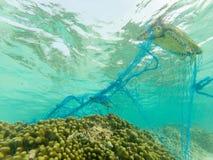 Tortue verte et un filet de pêche jeté image libre de droits