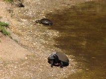 tortues Photos libres de droits