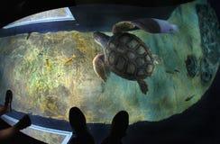 Tortues dans l'oceanarium de Lisbonne Images libres de droits