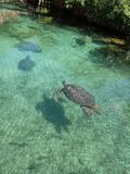 Tortues dans le xcaret Photo stock