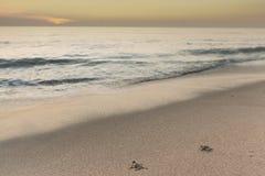 Tortues de mer au lever de soleil Photo libre de droits