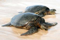 Tortues de mer hawaïennes Photos libres de droits