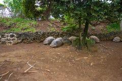 Tortues de sommeil en parc naturel de Vanille de La, Îles Maurice images stock