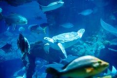 Tortues et poissons hauturiers Photographie stock libre de droits