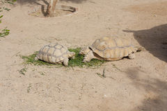Tortues exposant au soleil la photo Photo stock