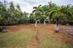 Tortues géantes des Seychelles en parc naturel de Vanille de La, Îles Maurice photographie stock