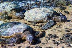 Tortues sur la plage hawaïenne Photographie stock libre de droits