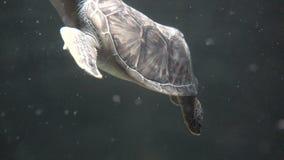 Tortues, tortues, reptiles, animaux, faune banque de vidéos