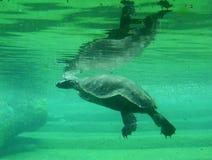 tortuga Марины стоковое фото rf