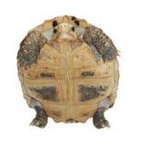 Tortuga Fotografía de archivo libre de regalías