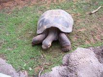 Tortuga Foto de archivo