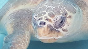 tortuga Стоковая Фотография RF