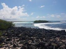 Tortuga Bay Santa Cruz Island Galapagos Ecuador royalty free stock images