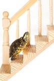 Tortuga con la ambición Imagen de archivo libre de regalías