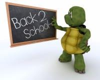 Tortuga con la tarjeta de tiza de la escuela de nuevo a escuela Fotos de archivo