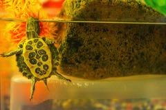 Tortuga de la charca en acuario stock de ilustración