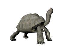 Tortuga de las Islas Galápagos - 3D rinden ilustración del vector