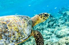 Tortuga de mar fotos de archivo libres de regalías