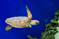 Tortuga de mar 1 Fotografía de archivo libre de regalías