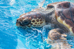 Tortuga de mar Imágenes de archivo libres de regalías