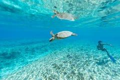 Tortuga de mar Fotografía de archivo libre de regalías