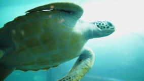 Tortuga de mar en el acuario almacen de metraje de vídeo