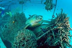 Tortuga de mar en el arrecife de coral subacuático Fotografía de archivo