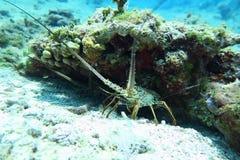 Tortuga de mar en un agua cristalina Fotos de archivo