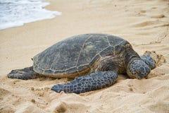 Tortuga de mar que descansa sobre la playa imagen de archivo