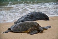Tortuga de mar que descansa sobre la playa fotografía de archivo libre de regalías
