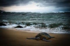 Tortuga de mar que descansa sobre la playa imagenes de archivo