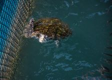 Tortuga de mar, reptiles Imágenes de archivo libres de regalías
