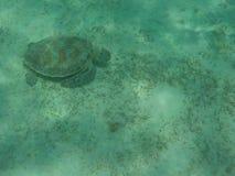 Tortuga de mar verde Imagen de archivo