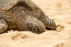 Tortuga de mar verde hawaiana fotografía de archivo