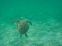 Tortuga de mar verde que sube para el aire Fotografía de archivo libre de regalías