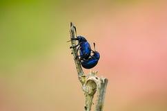 Tortuga del insecto Fotos de archivo libres de regalías