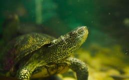 tortuga del r?o en un acuario imagenes de archivo
